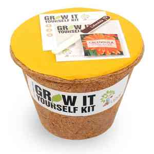 Grow it Yourself Large Calendula Kit