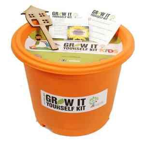 Sunflower Grow it Yourself Kit