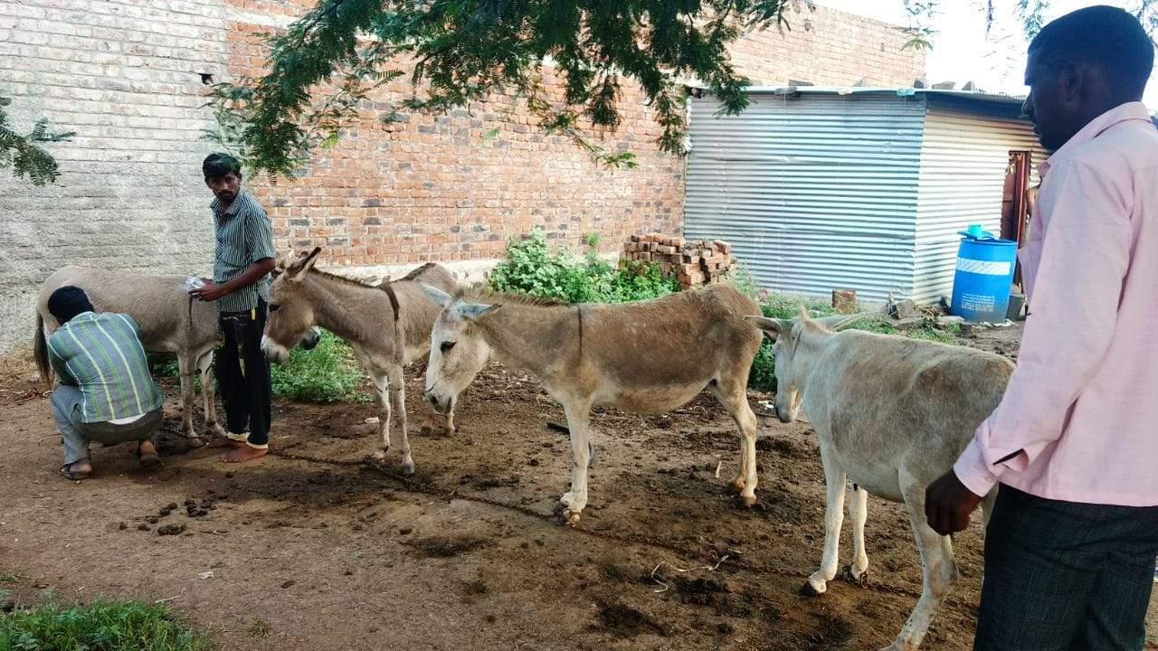 Donkey's Milk Soap