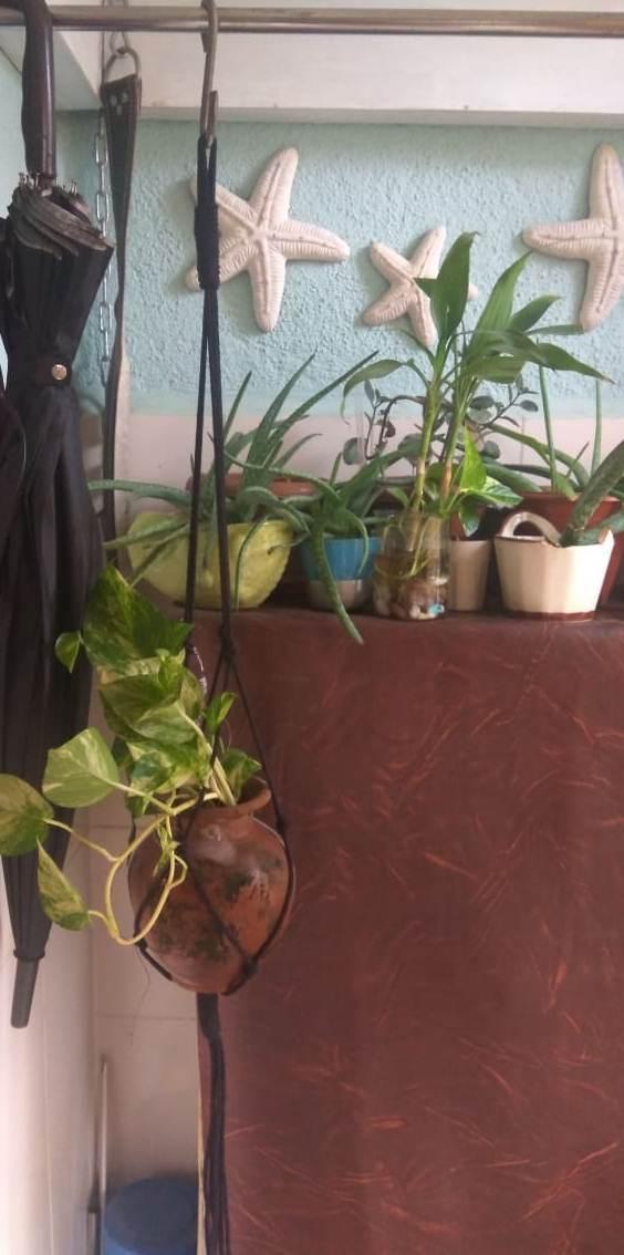 Kala - Macrame Plant Holder