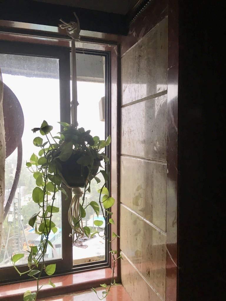 Traditional Macrame Indoor Plant Holder