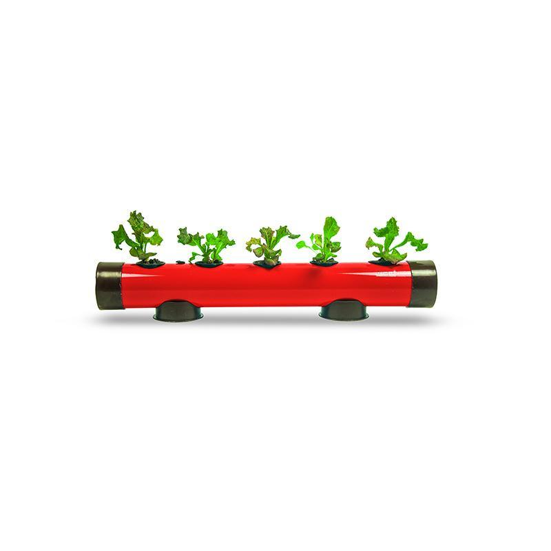 Mini Hydroponic Growing Kit