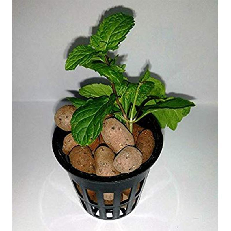 Expanded Clay Balls for Seed Propagation