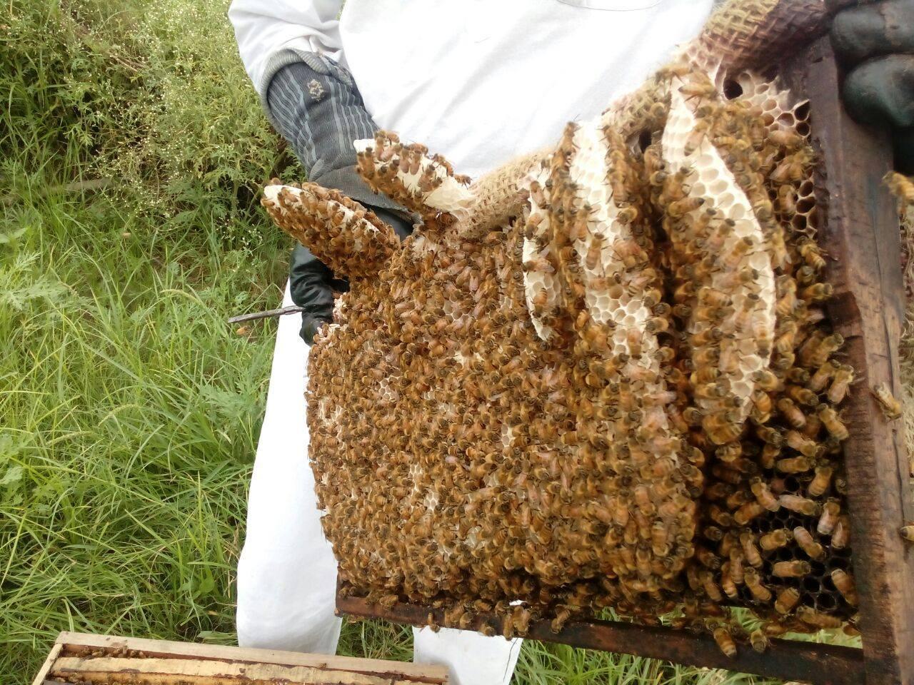 Natural Cinnamon Honey