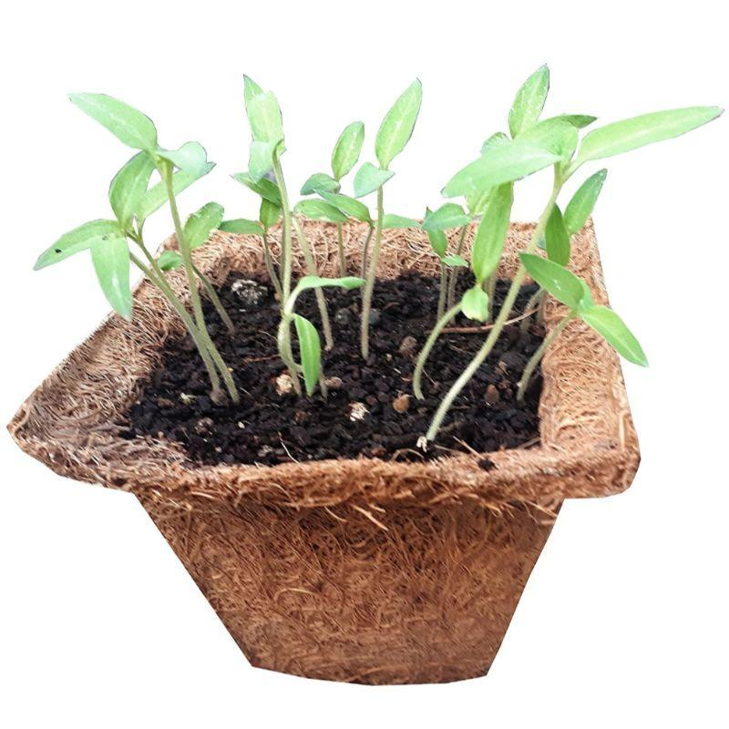 Small Chilli Grow Kit