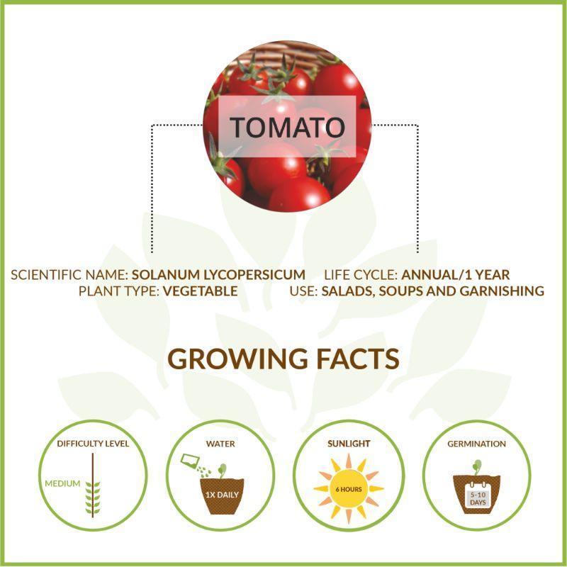 Grow it Yourself Small Tomato Kit