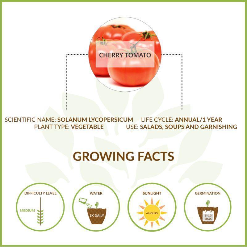 Large Cherry Tomato Kit