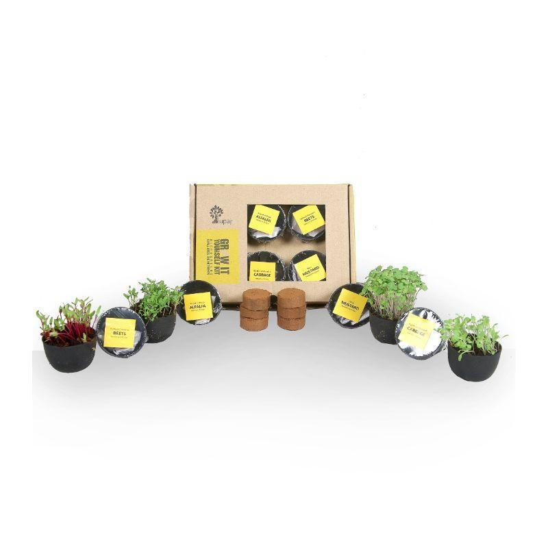 Microgreens Grow it Yourself Kit