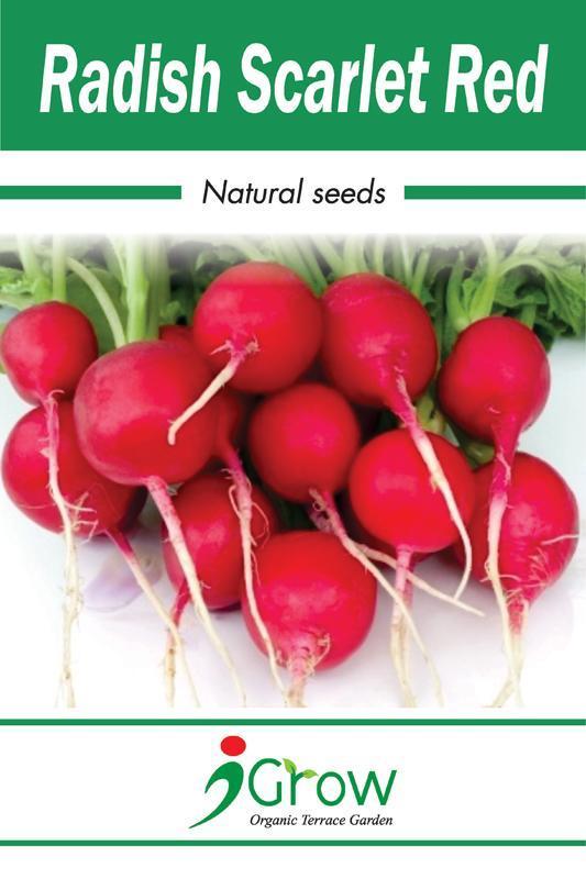 Red Radish Seeds