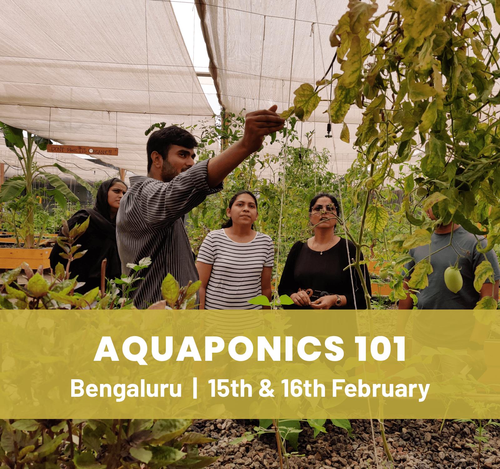 Aquaponics 101 Workshop