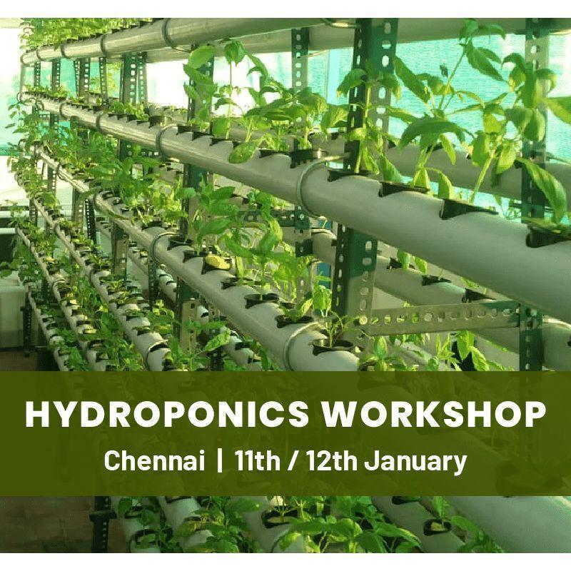 Hydroponics Workshop - Chennai