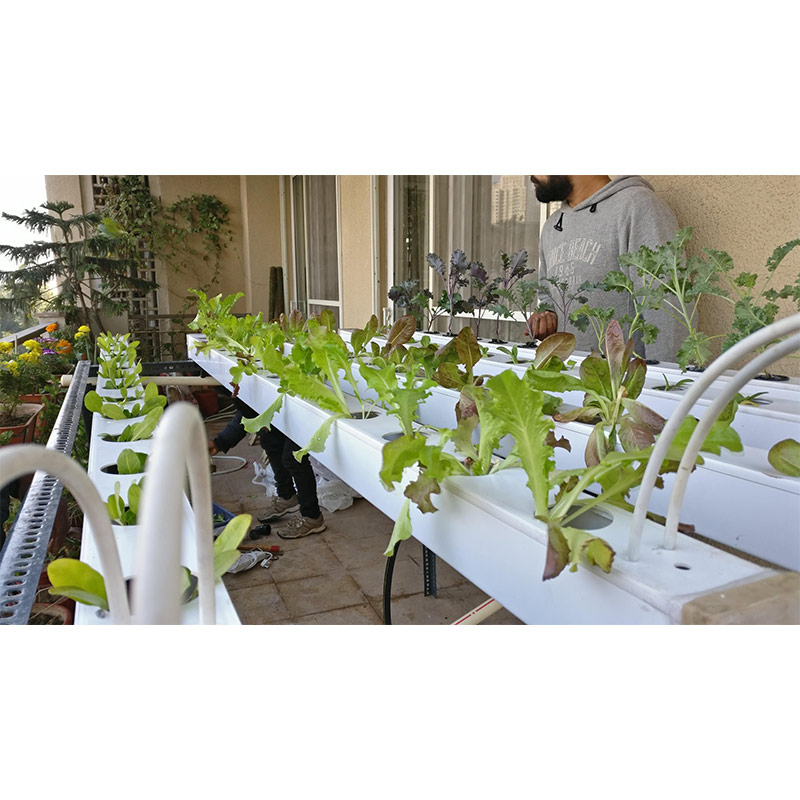 Hydroponics Online Foundation Course