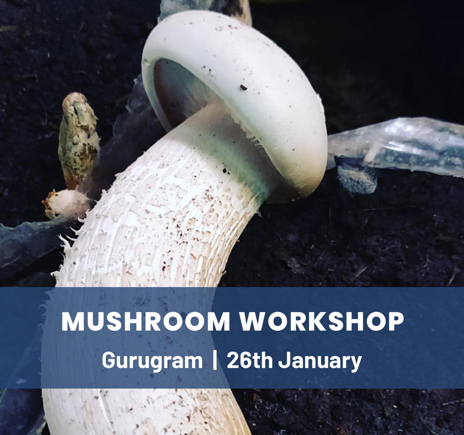 Mushroom Workshop-Gurgaon