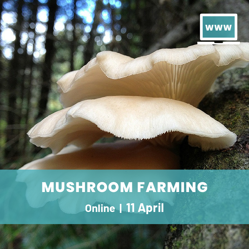 Online Workshop on Mushroom Farming