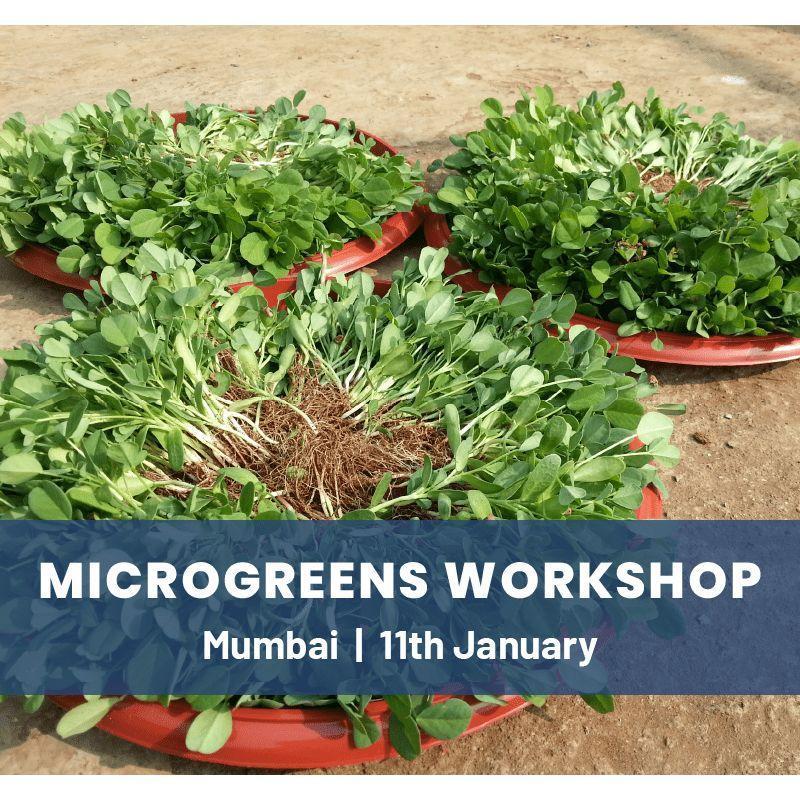 Microgreens Workshop