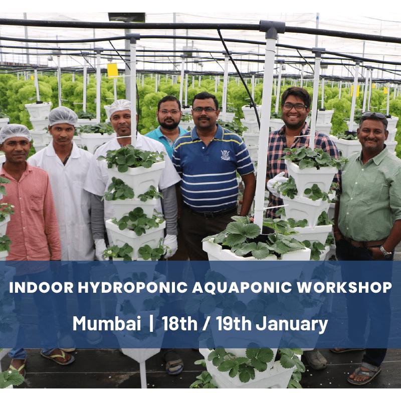 Indoor Hydroponics & Aquaponics Workshop