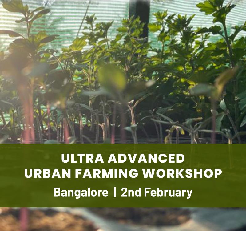 Ultra Advanced Urban Farming Workshop
