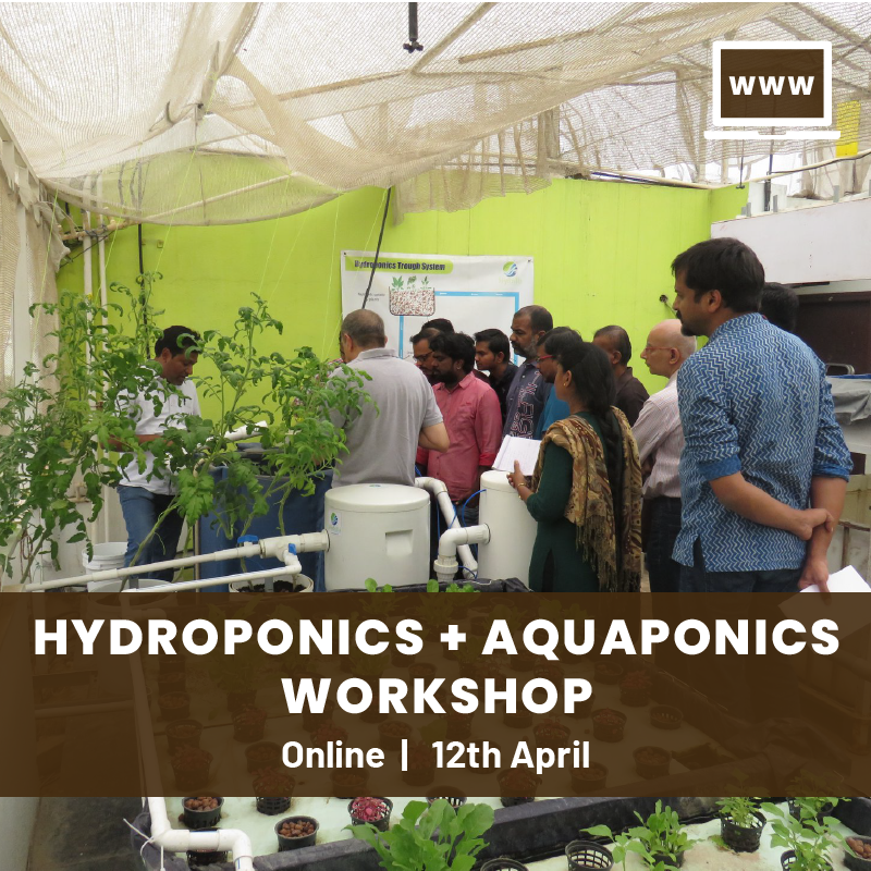 Hydroponics & Aquaponics Online Workshop