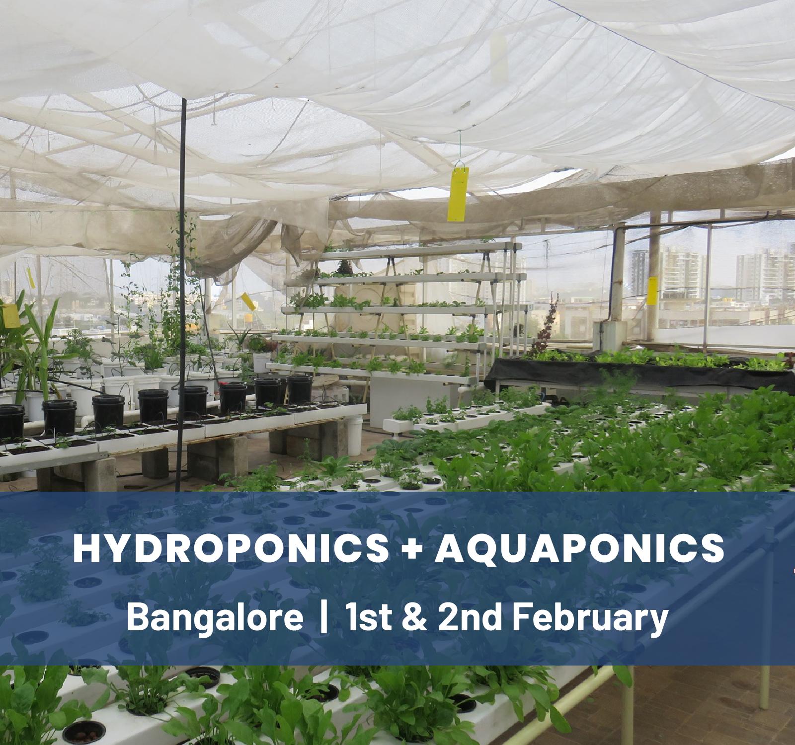 Aquaponics & Hydroponics Workshop