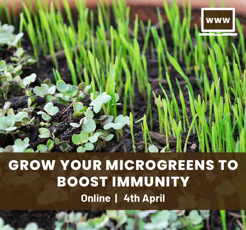 Boosting Immunity Through Microgreens Online Workshop