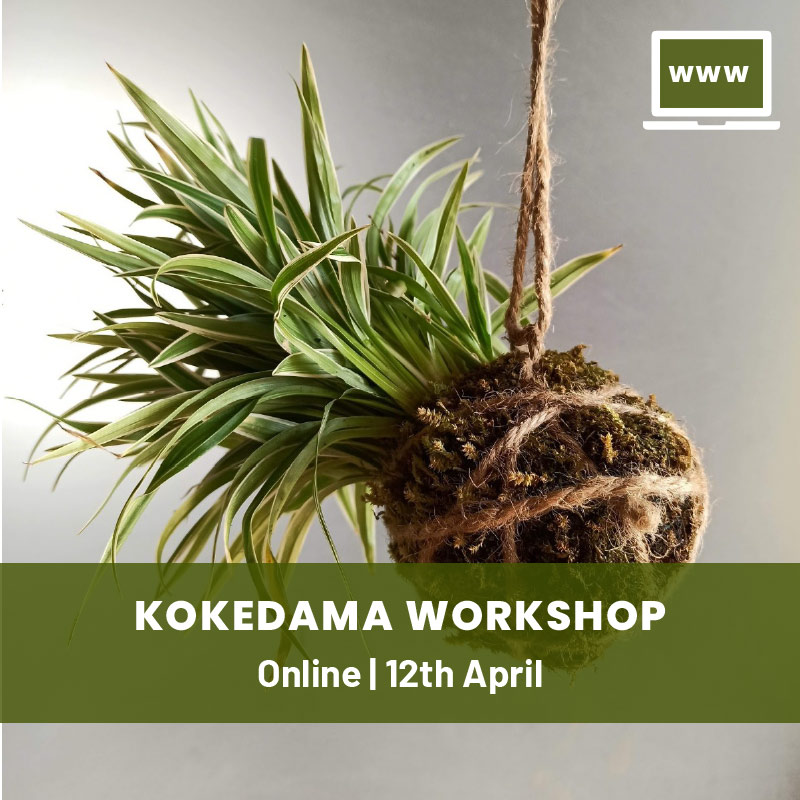 Kokedama Online Workshop