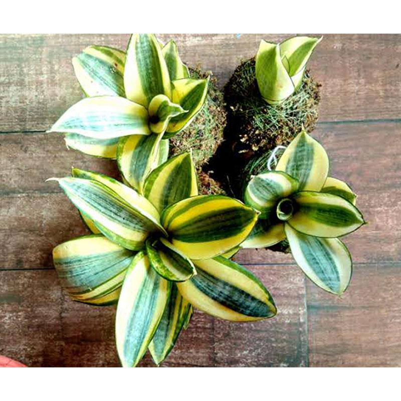 Growing Succulents Online Workshop