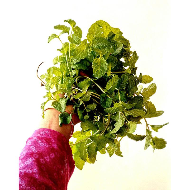 Growing Kitchen Herbs Online Workshop