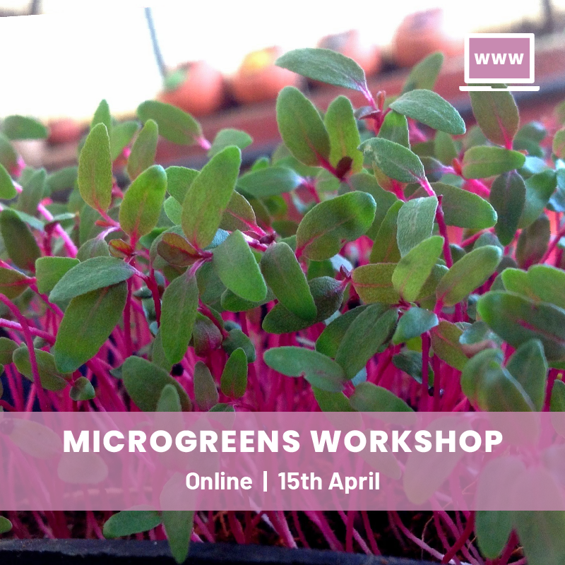Grow Your Own Microgreens Online Workshop